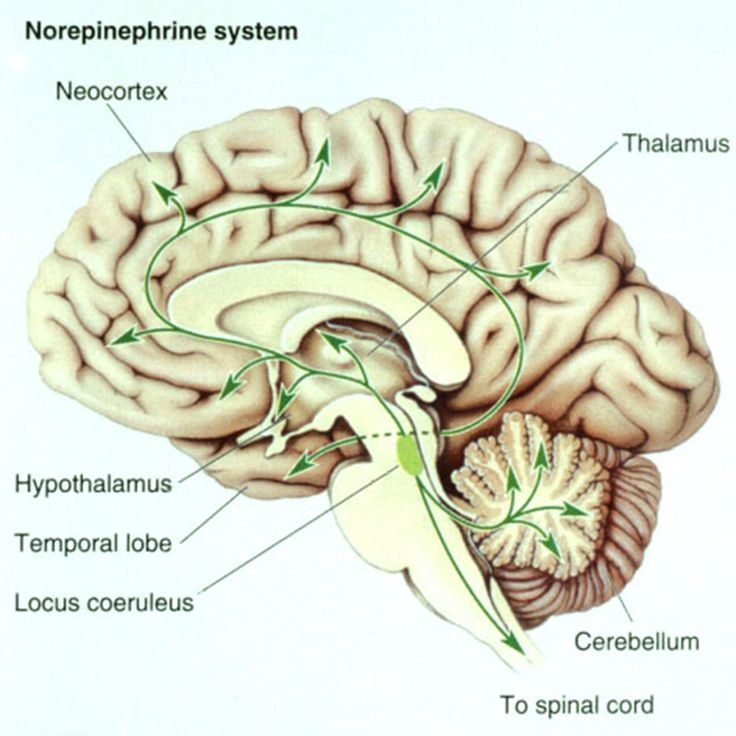Norepinephrin system. Locus coeruleus brain production of noradrenaline; direct blood stream production from the adrenal medulla. Arousal, activation, mobilization.