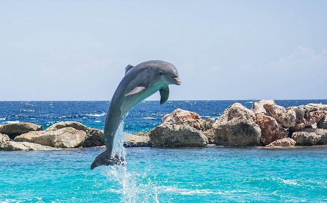 Delphin, Aquarium, Springen, Fisch, Tier, Ozean, Wasser