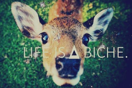 Life is a biche !
