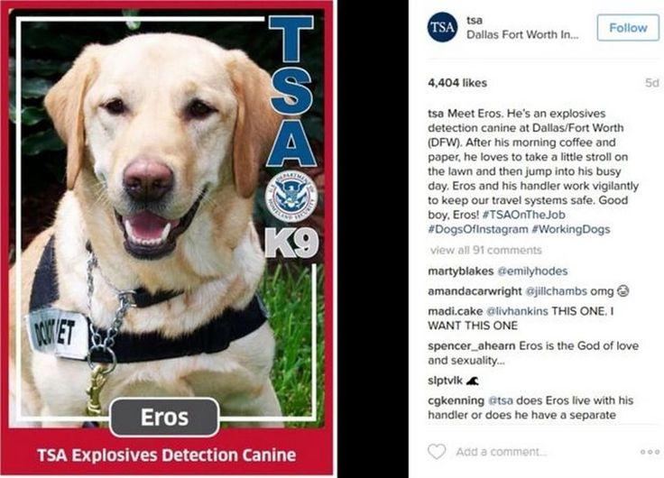 Los curiosos objetos incautados de la Administración de Seguridad en el Transporte de EE.UU. forman parte de las cuentas con más seguidores en la red social de fotografía y video digital de Facebook