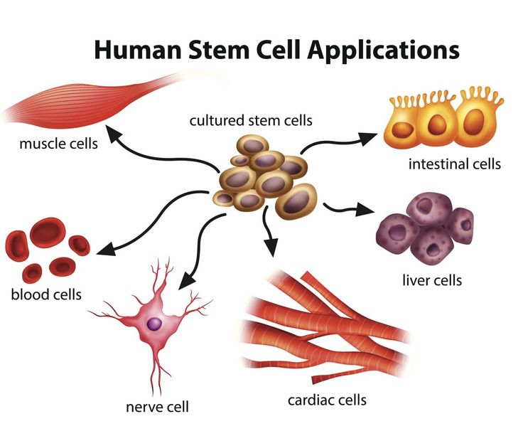 Stem Cell Treatment for Low Testosterone – Can it be Done?