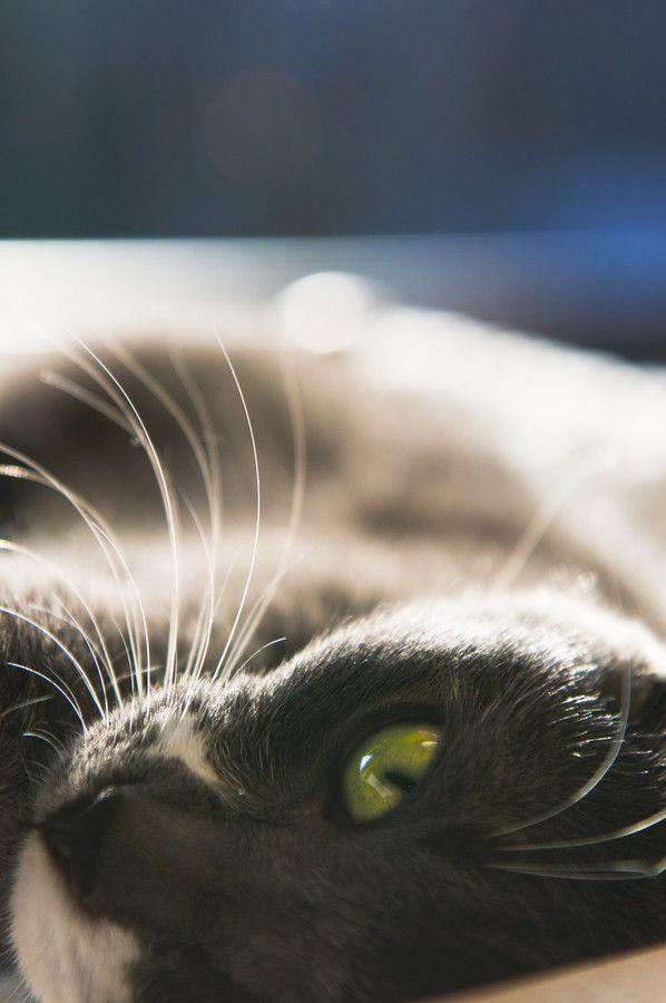 Pisica by Anna Liverts, via 500px