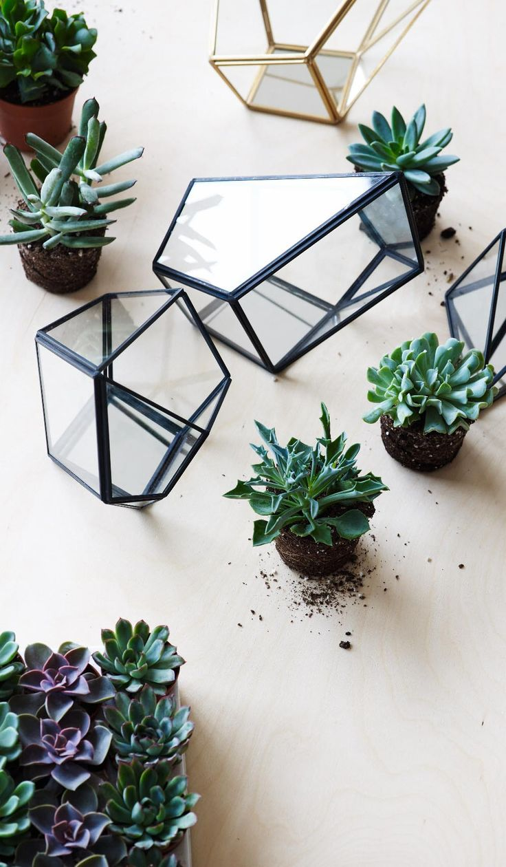 Create a unique miniature world, candle display feature or living art with our this structural terrarium.