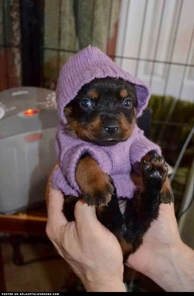 Warm And Cozy Pup (he looks like he's saying.. Seriously?)
