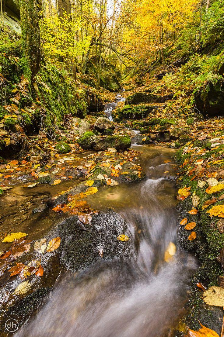 Herbstrauschen 3 | by Dirk Hoffmann Fotografie