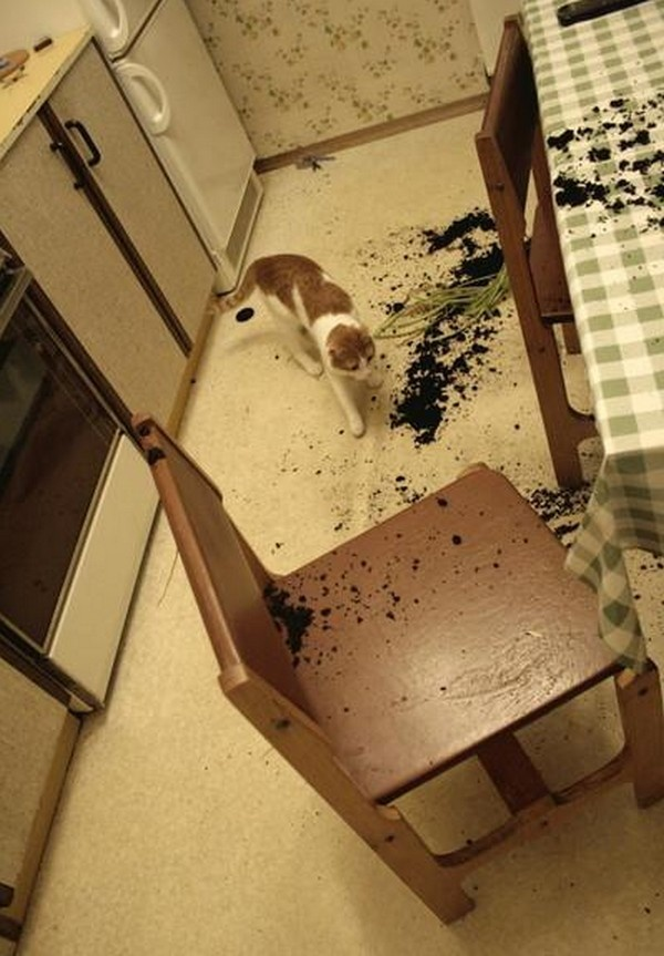 Look at what the dog did.....Kitty Kitty