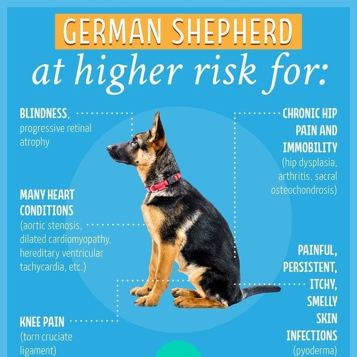 Tag A German Shepherd Owner Follow Us For More Dog Dog Puppy