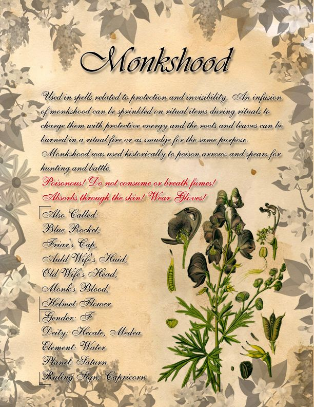 Book of Shadows: Herb Grimoire - Monkshood by CoNiGMa on DeviantArt