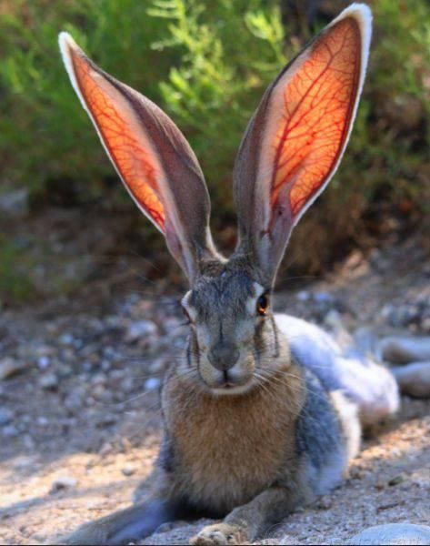 rabbit ears two ears one mouth                                                                                                                                                                                 More