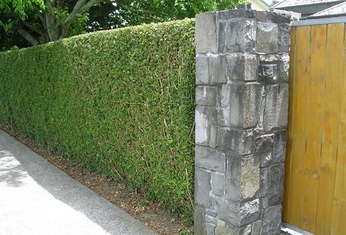 A well established older hedge, finely clipped with a new stone pillar and driveway gate.