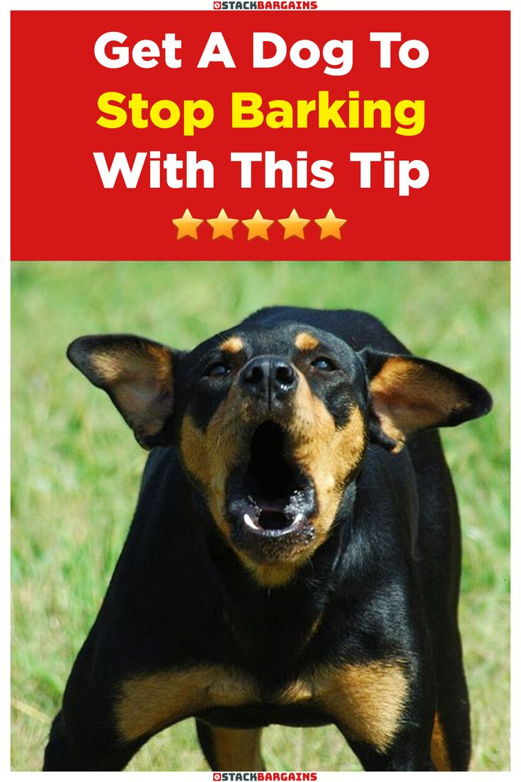 Get a dog to stop barking with this tip in 2020 stop dog