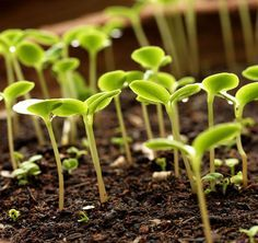 Using hydrogen for faster seed germination