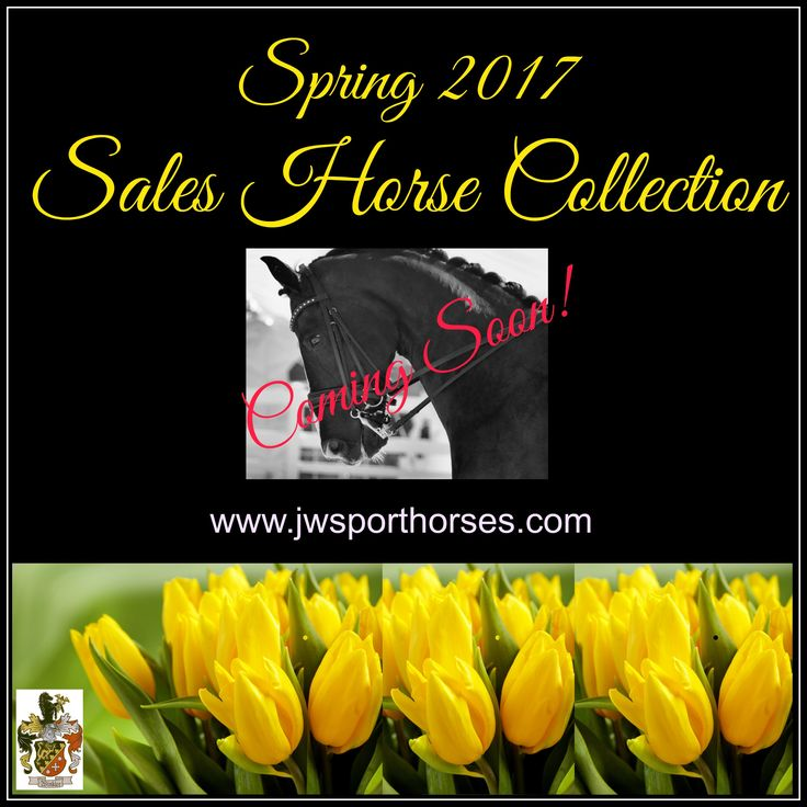 Watch for our amazing selection of dressage & show jumpers. Range of price points.