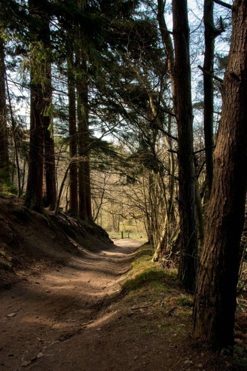 Dalby Forest, one of my favourite places to go caravanning when the kids were little!!