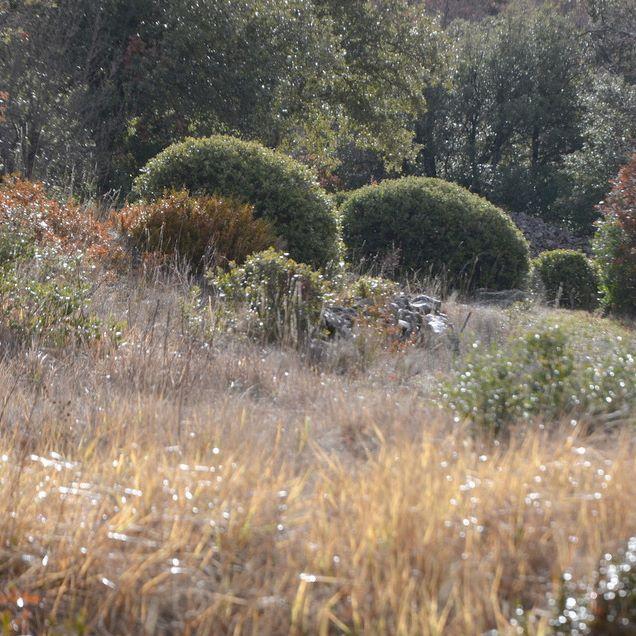 #provence#landscape#garden#garrigue#wildgarden#winter#bergerie#designer#gardener#aureliegueniffey#myshelter