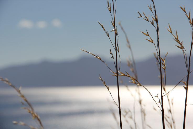 Blue skies, beach, new Zealand, close up.