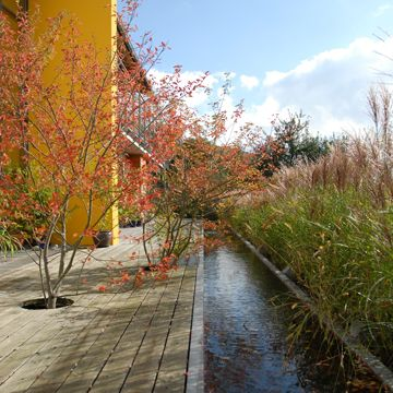 Tall grasses on one side and decking on other side of clean, linear water feature