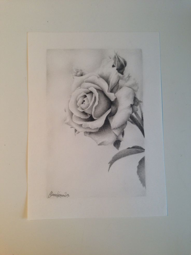 Graphite drawing of a rose. I drew it for my mom on Mother's Day.