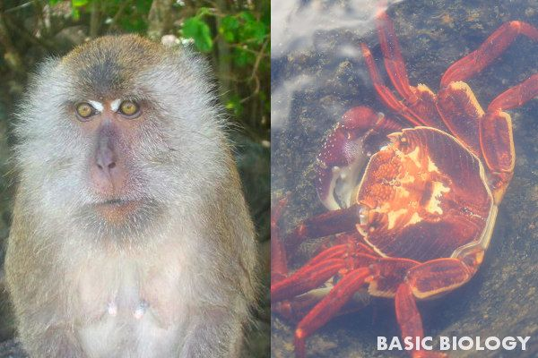 A vertebrate monkey and an invertebrate crab - http://www.basicbiology.net/biology-101/introduction-to-animals/