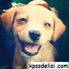 Köpek Resimleri, Sevimli köpek resimleri, Komik köpek, Şirin köpek resimleri, Küçük-Tatlı-Yavru köpek, Köpek cinsleri, En tatlı köpek resimleri, En güzel köpek resimleri http://www.kpssdelisi.com/kopek-resimleri/