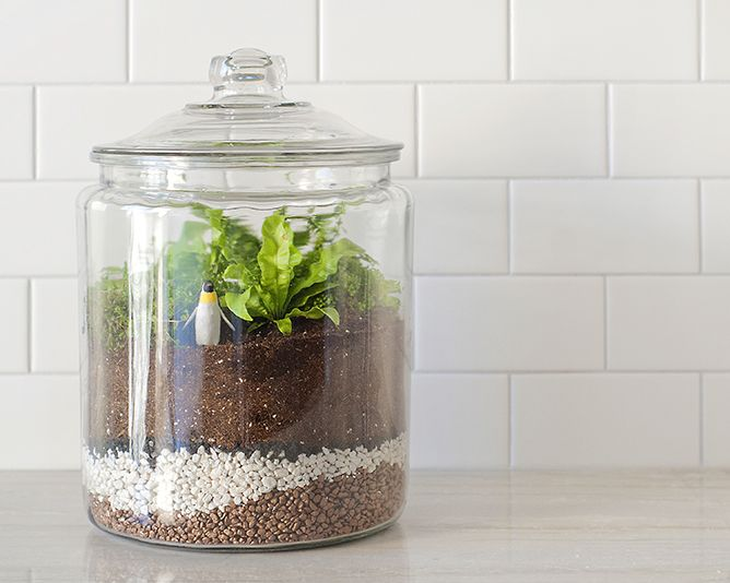 closed-terrarium