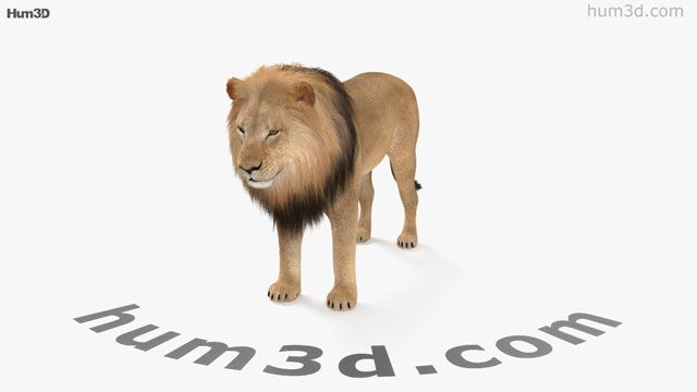 Google 3d Animals Not Showing Up Here S What