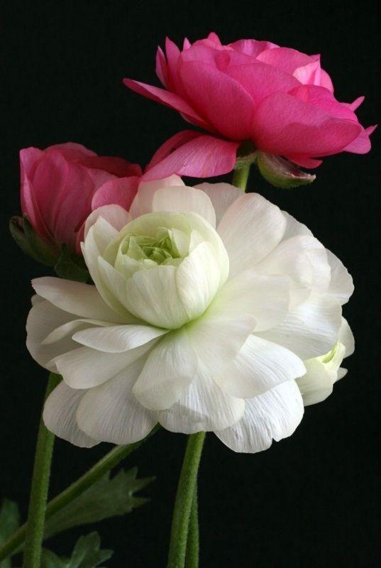 Beautiful Embrace Flowers Garden Love flowersgardenlove: