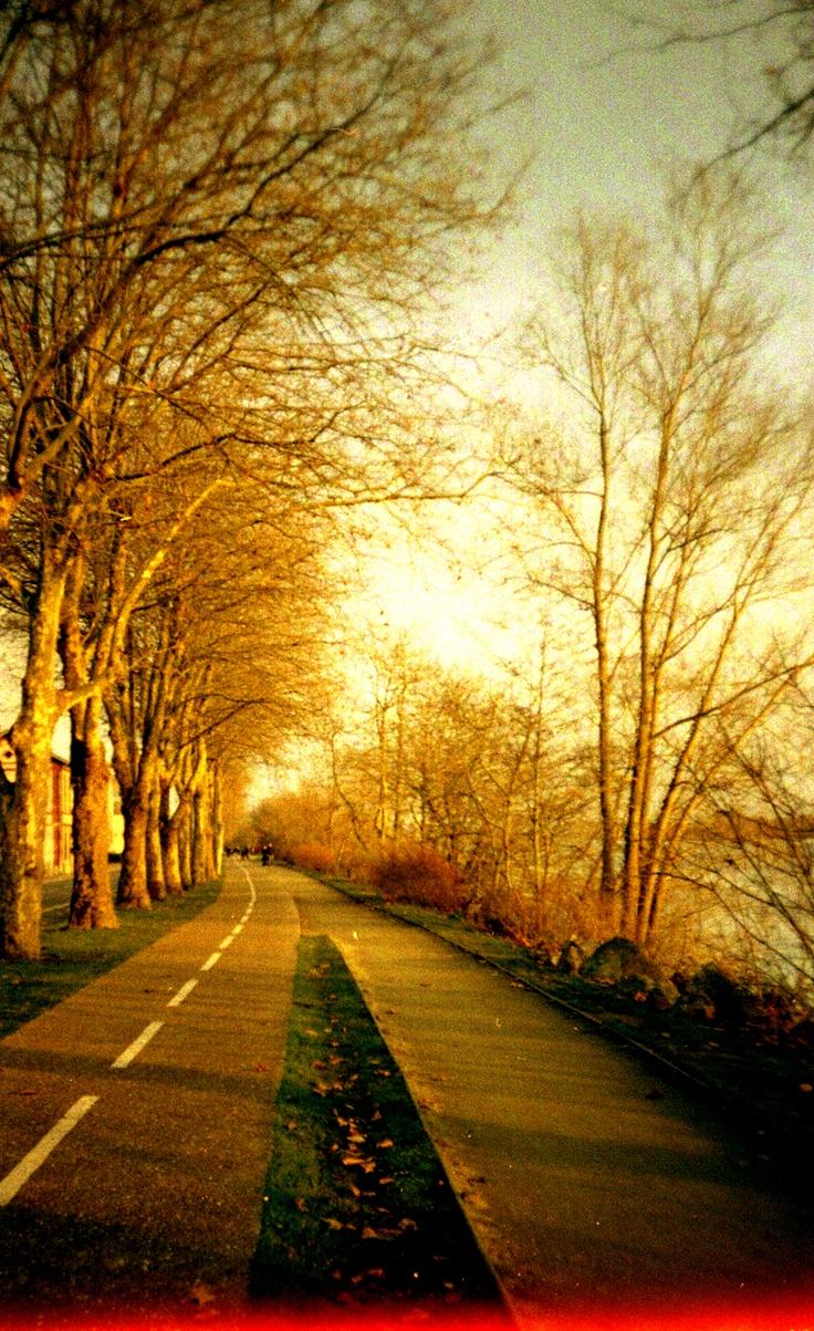 automne #art #yellow,