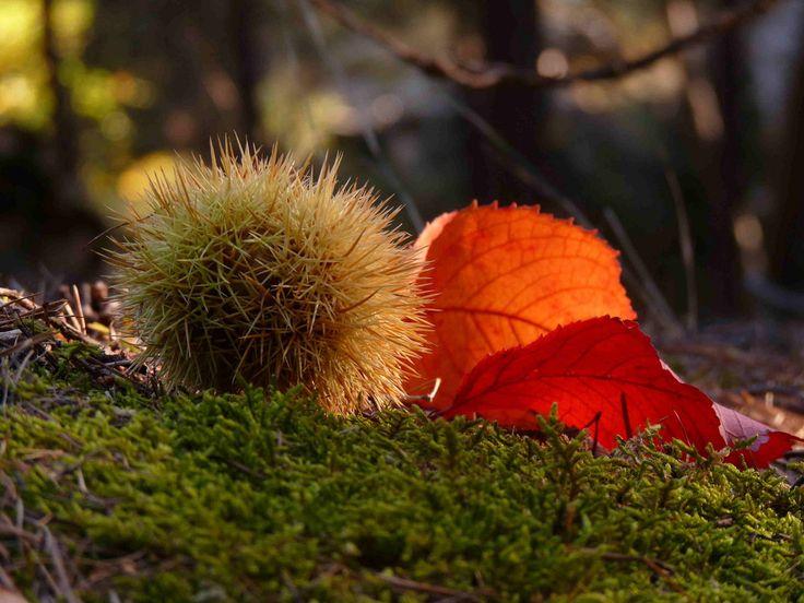 E' autunno…