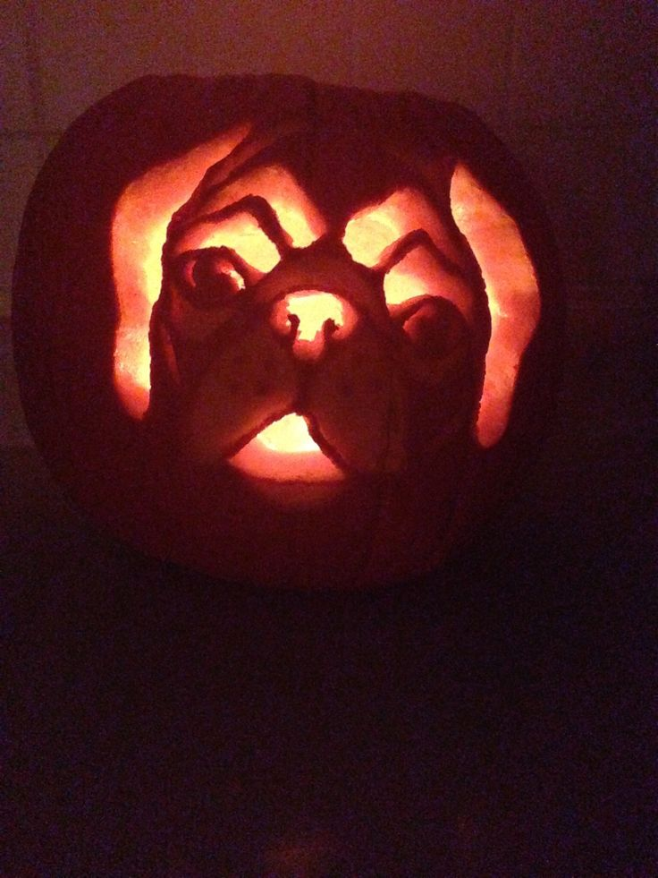 Best images about pug carving stencils on pinterest