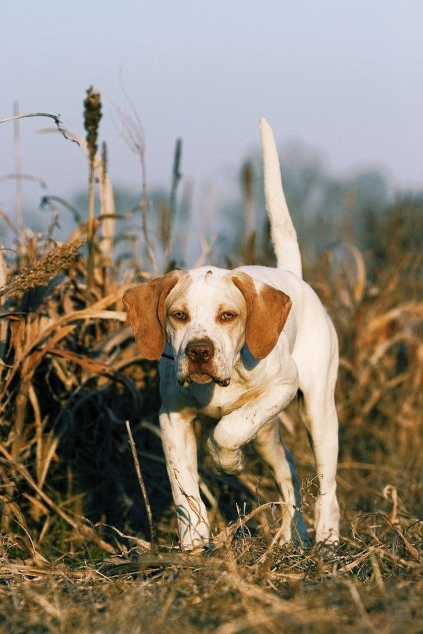 www.Filson.com | Prepping for the Upcoming Hunt: Dog Training and Performance Tips on Filson Life.