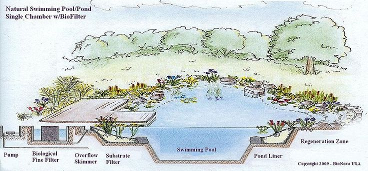 natural swimming pool  Schematic section of the sistem for a single chamber NSP.