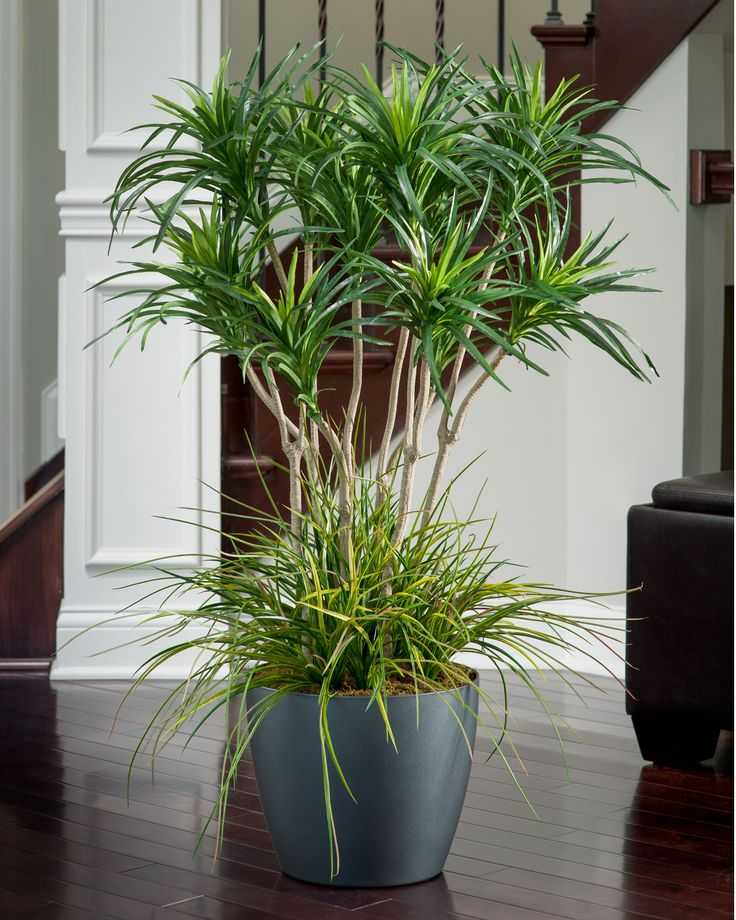 Deluxe Yucca Silk Plant-grass in bottom is an extra. There's a choice including pathos.
