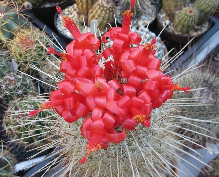 A sivatagok szúrós szépségeihez nyerhetsz belépőjegyet egy egyszerű kérdés megválaszolásával. http://balkonada.cafeblog.hu/2017/05/08/jatssz-es-nyerj-belepot-a-kaktusz-kiallitasra/