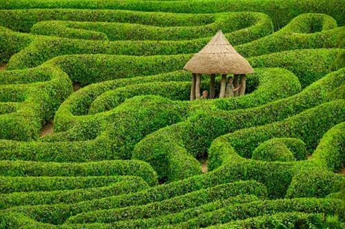 Lush green landscapeTrees Forts, National Geographic, Laurel Maze,  Labyrinths, Places, National Trust, Cornwall England, Glendurgan Gardens, Fairies Tales