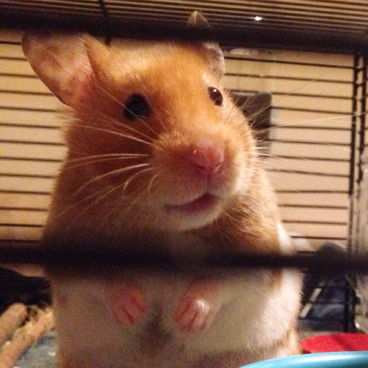 96429dfcae5b6a24b45a69966c1c4b40 - How To Get My Hamster To Stop Biting His Cage