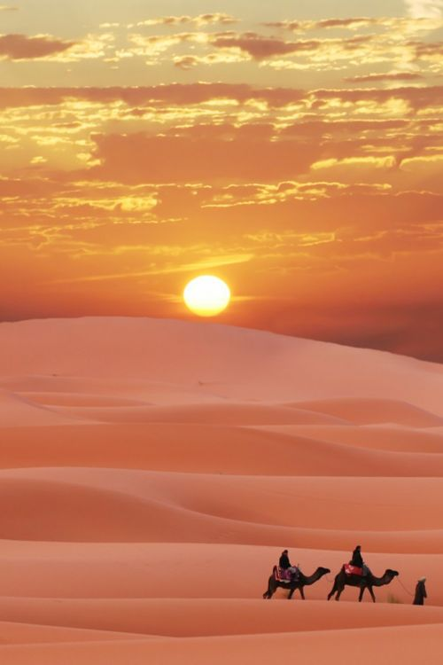 Ride a camel through a desert.