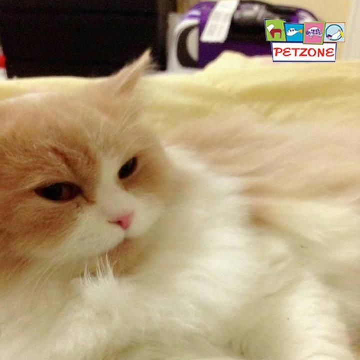 #Petzone #Throwback!  Pet of the Week!  The adorable one!