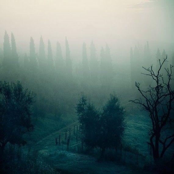 misty foggy pretty - photograph on Etsy $30