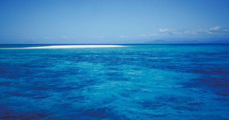¿Qué plantas viven en la zona nerítica?. La zona nerítica abarca hasta los 200 metros (656 pies) de profundidad del océano e incluye la costa completa y la mayoría de la plataforma oceánica. Allí existe una gran variedad de animales y plantas. La vida vegetal en la zona nerítica es especialmente importante para el ecosistema, tanto el de la zona en sí misma como el global, ya que ...