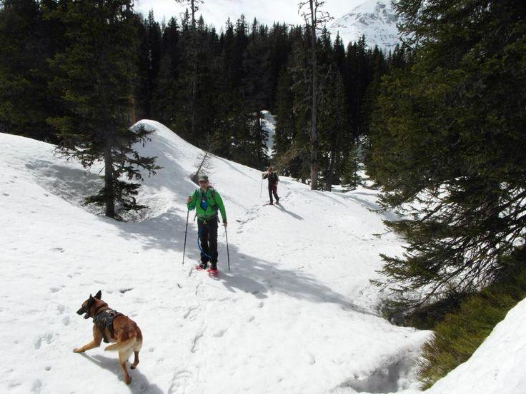 Sneeuwschoen wandelen met je hond