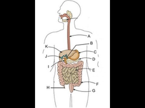8 best Digestive Issues images on Pinterest