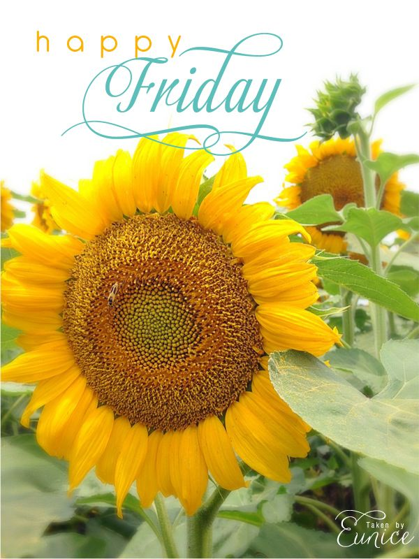 Have A Blessed Friday Everyone Happy Friday everyone ...