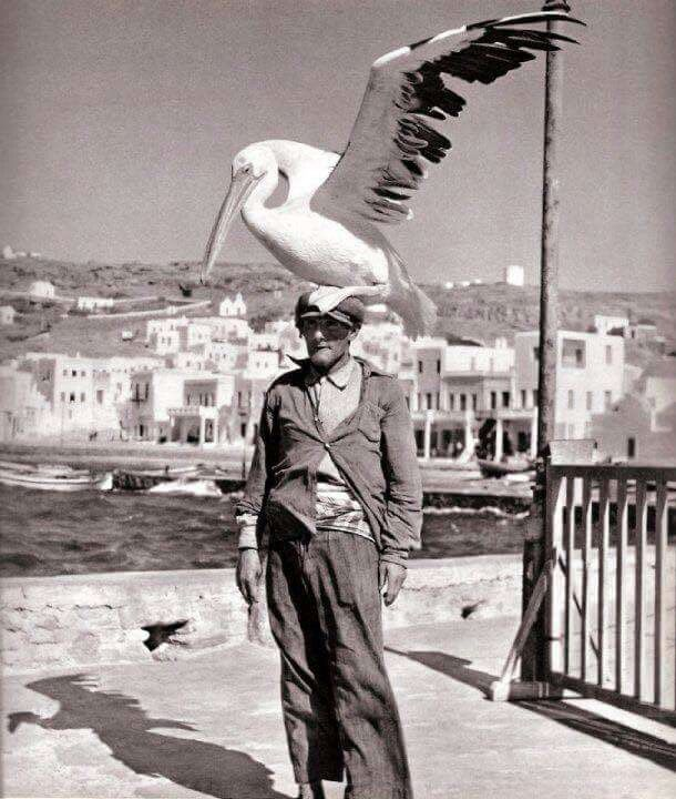 Birdman of Mykonos amd Mr. Pelican