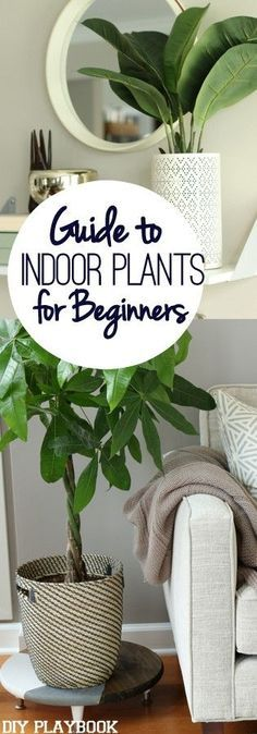 If you have a brown thumb, then this post is for you. Add greenery and indoor plants to your home with our easy guide.