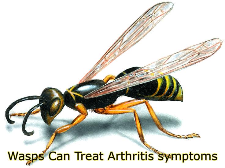 Using Wasps to Treat Arthritis