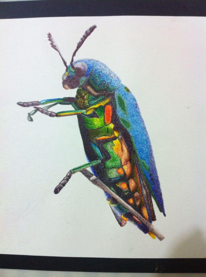 insecto  Esfero sobre durex