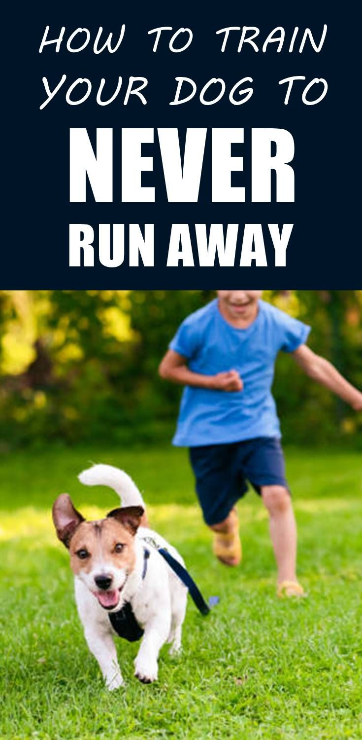 Why Your Dog Is Always Trying To Run Away And How To Fix It Dogs Training Your Dog Puppy Training