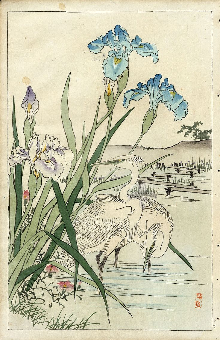 Iris, Heron. by Bairei Kono. Flower and Bird Prints 1899. Japanese woodblock print | panteek.com