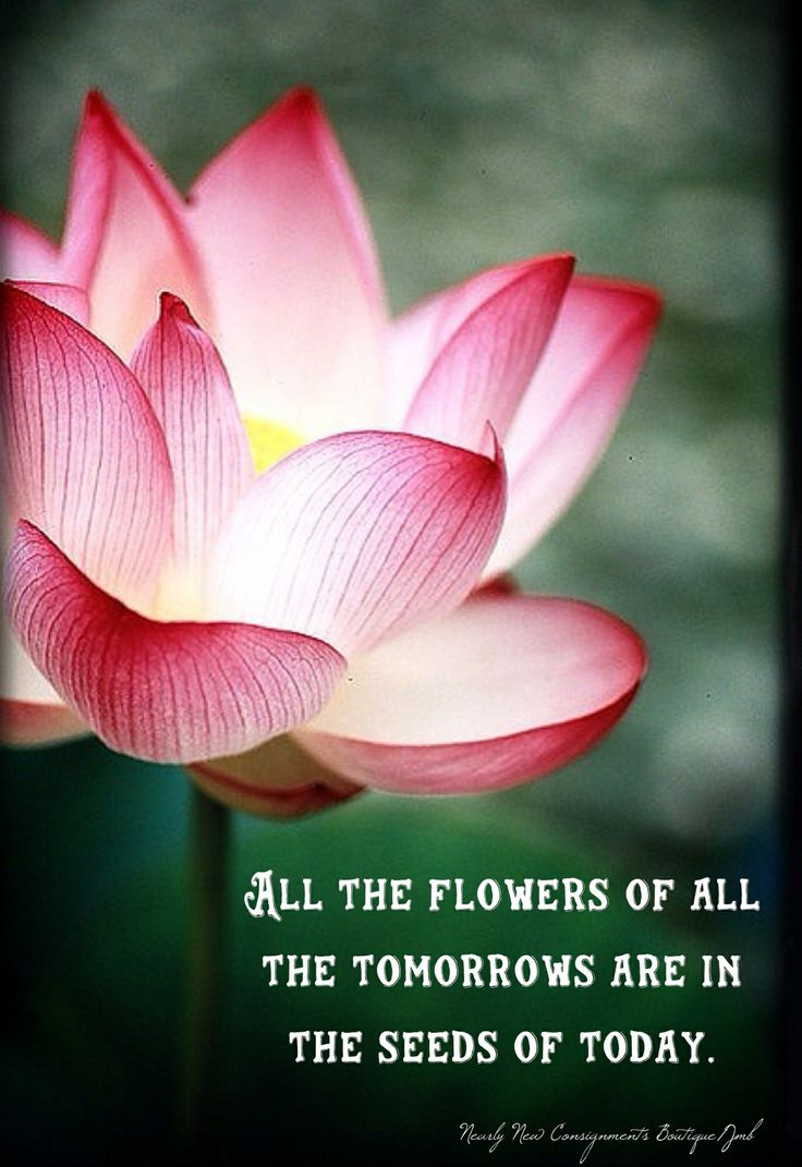 56 best lotus blossom images on pinterest lotus flowers lotus live embrace life inspirational beautiful flower all the flowers of all the izmirmasajfo